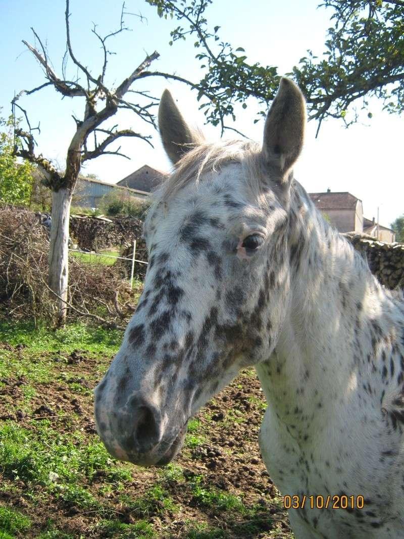 Mon cheval Eyak Eyak_314