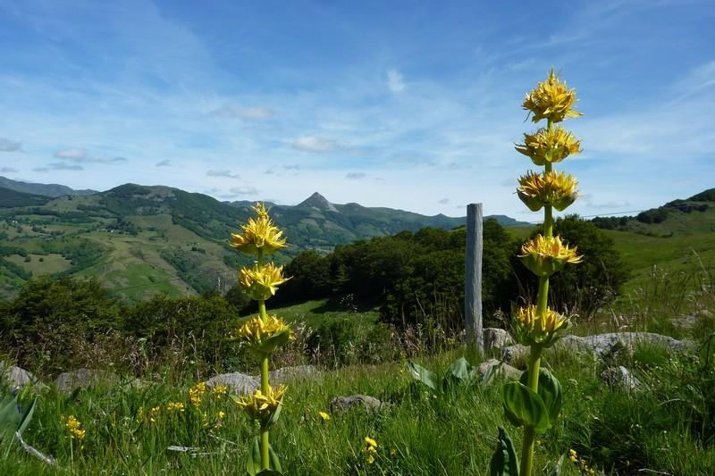 Vallée de la Cère : Burons Niercombe / Fumade vieillle P1050411