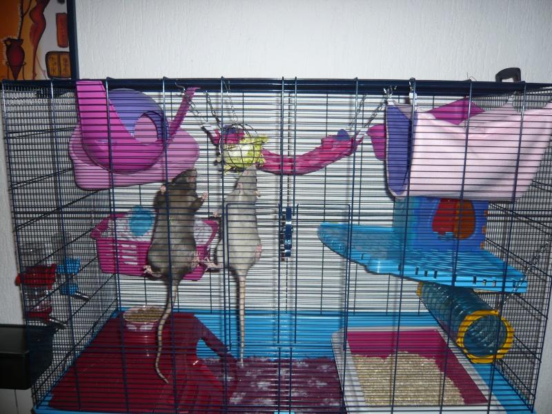 Photos de vos cages - Page 5 P1060710