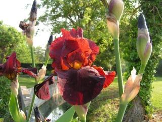 Les iris de Madame, Pict0012
