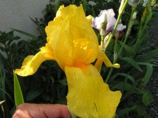 Les iris de Madame, Pict0014