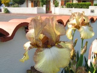 Les iris de Madame, Pict0016