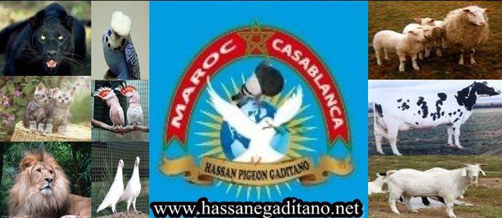 www.hassanegaditano.com