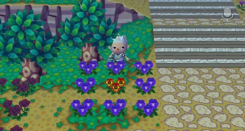 astuce pour l'arrosage des massifs de fleurs Astuce10