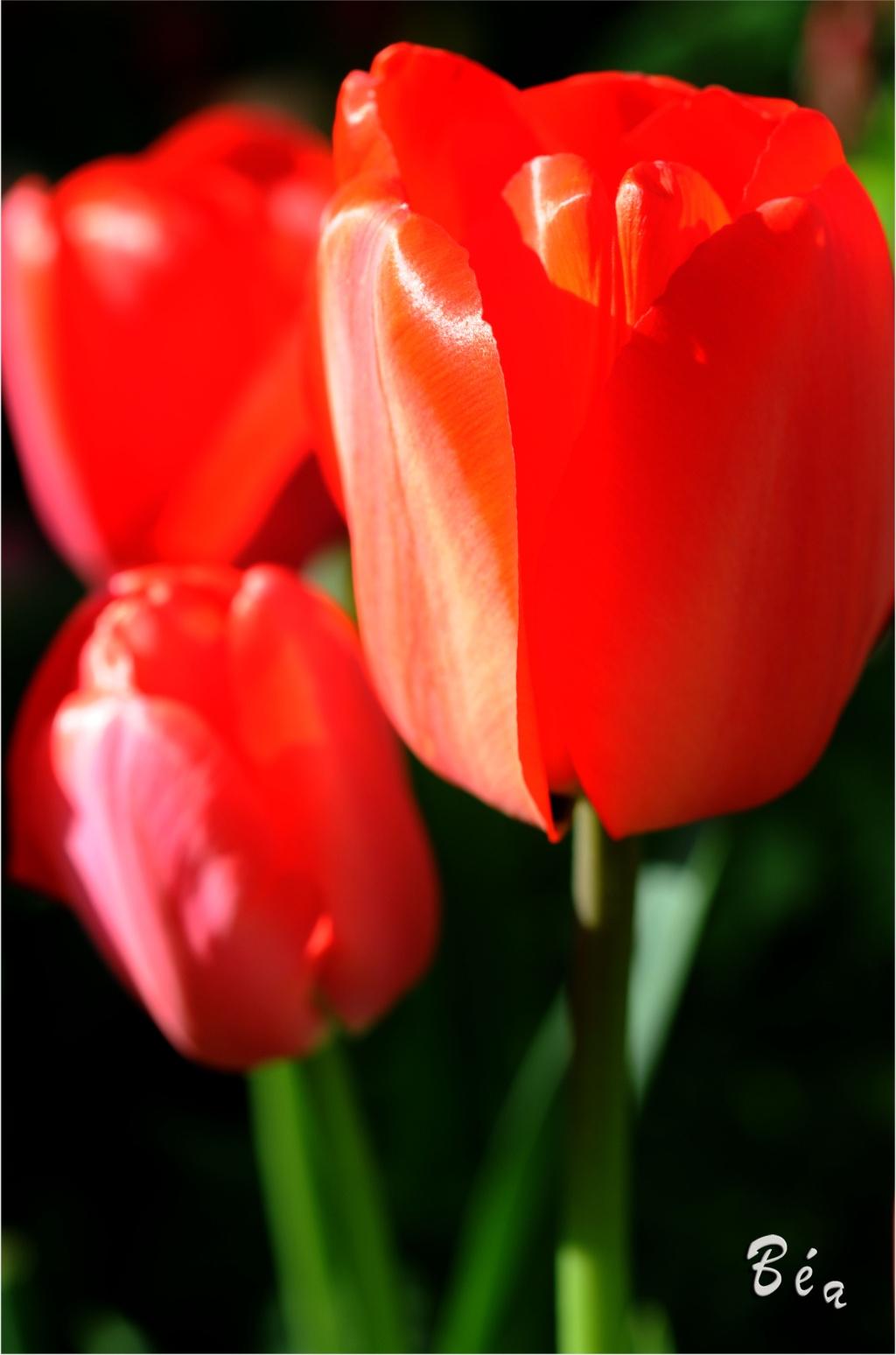 Les Fleurs - Page 2 Dsc_4810