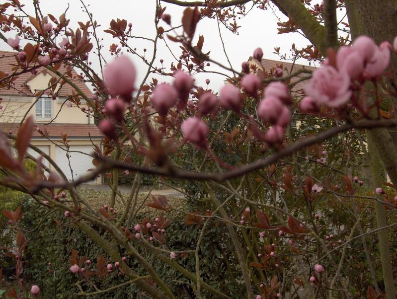 Les fleurs de mon jardin Branch10