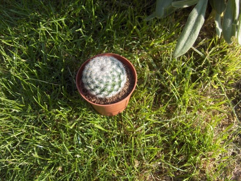 Floraisons de succulentes et cactées - Page 6 Cactus10