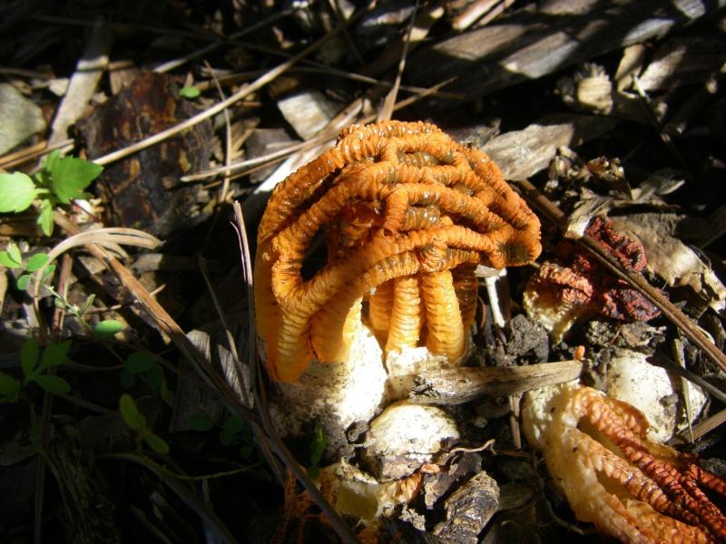 Le monde des champignons... Champi10