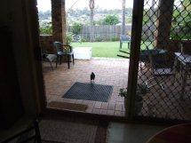 Les oiseaux des jardins australiens Elle_r11