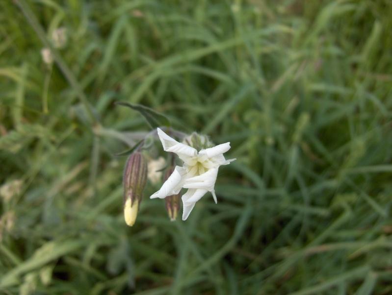 Ballade à travers champs Fleurs15