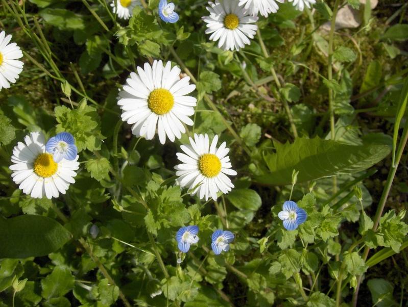Ballade à travers champs Fleurs17