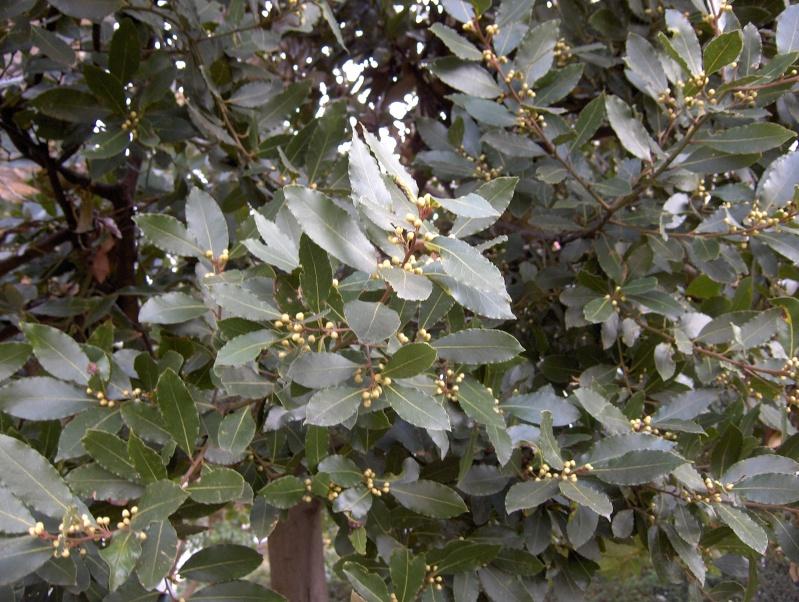 floraisons des arbres et des arbustes - Page 3 Hpim1910