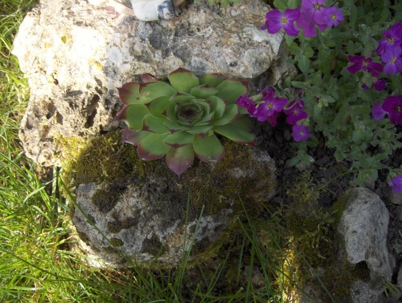Floraisons de succulentes et cactées - Page 6 Hpim2211
