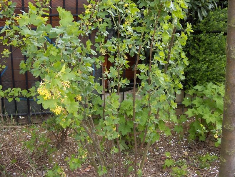 floraisons des arbres et des arbustes - Page 2 Hpim2413