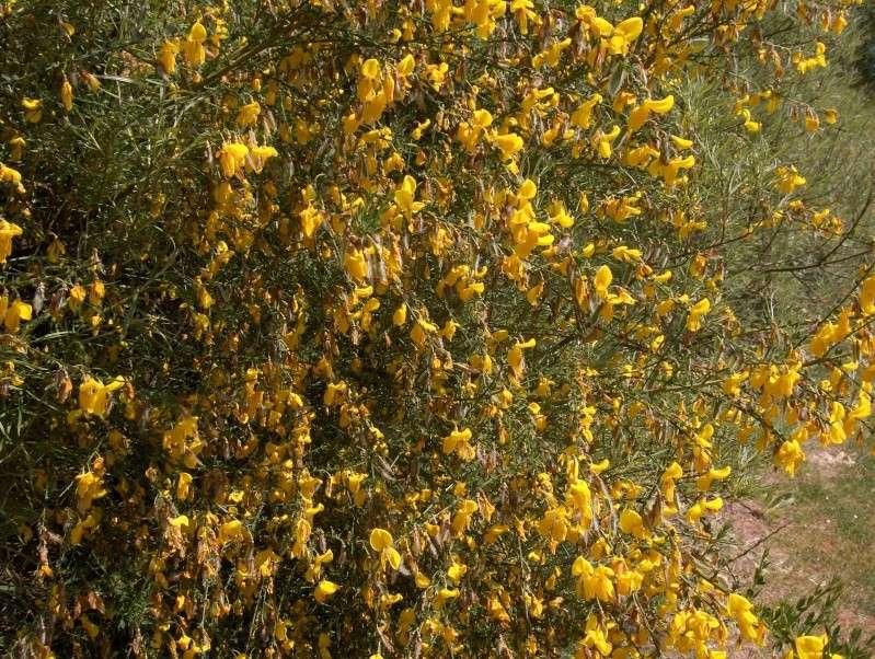 floraisons des arbres et des arbustes - Page 3 Hpim2736