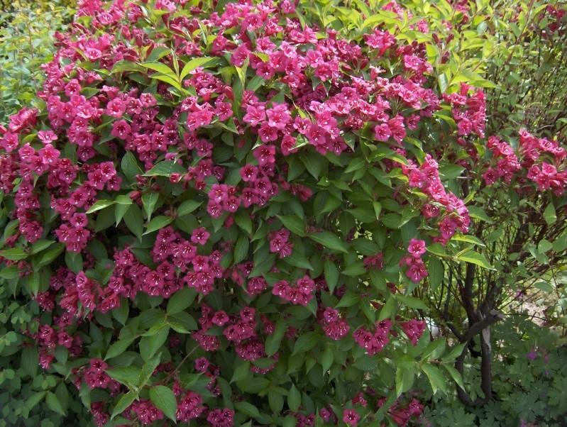 floraisons des arbres et des arbustes - Page 4 Hpim2814