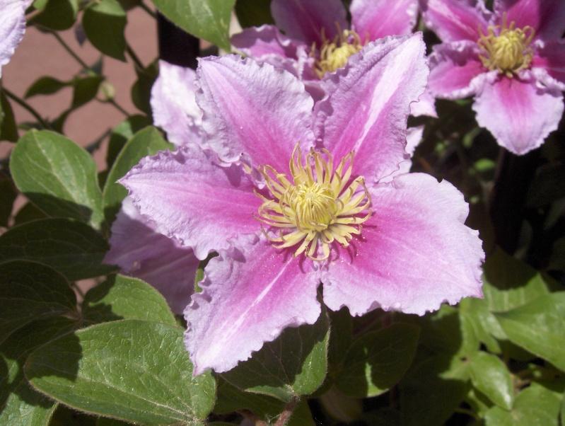 Les fleurs de mon jardin Hpim2841