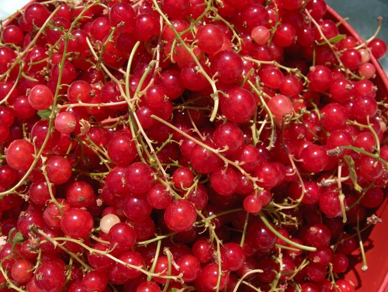 La récolte des fruits Hpim3039