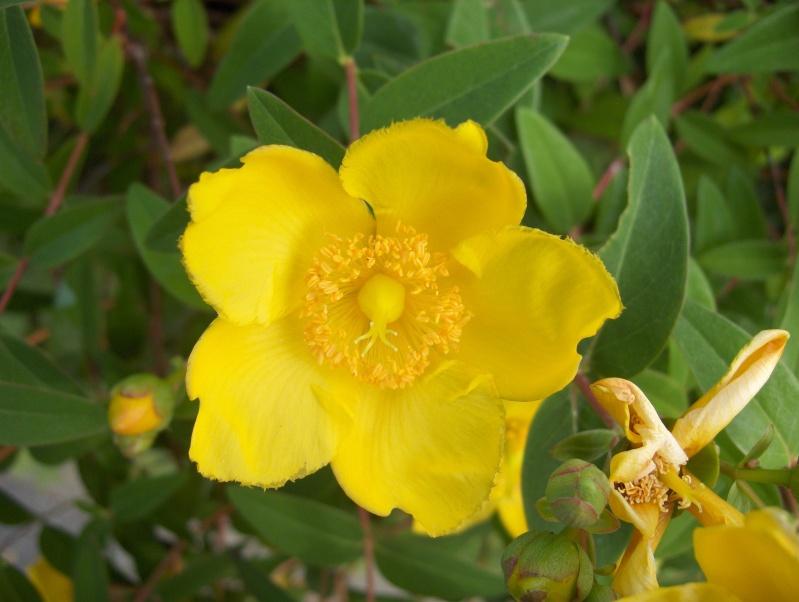 Les fleurs de mon jardin Hpim3052