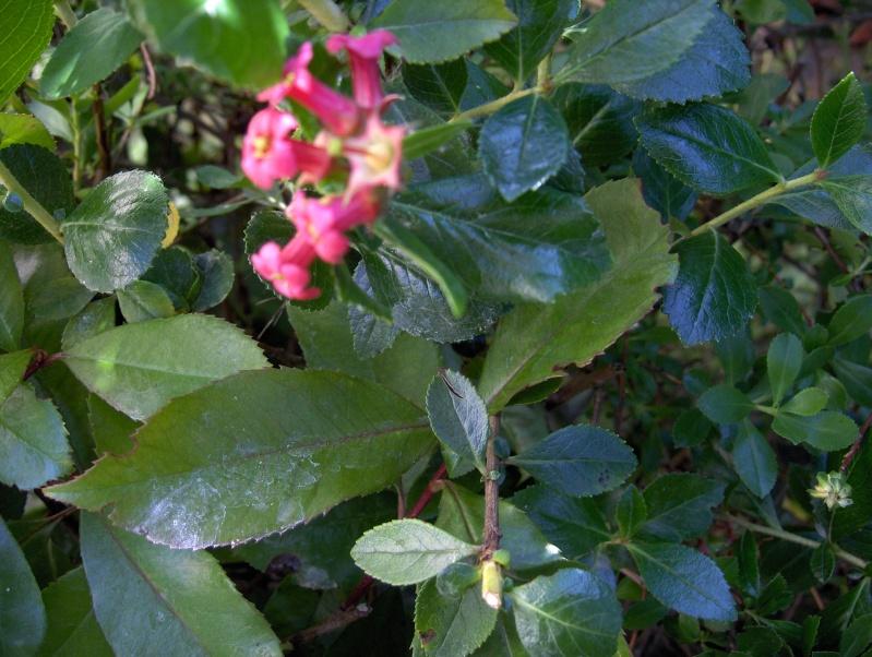 Floraisons du mois de juin Hpim3114