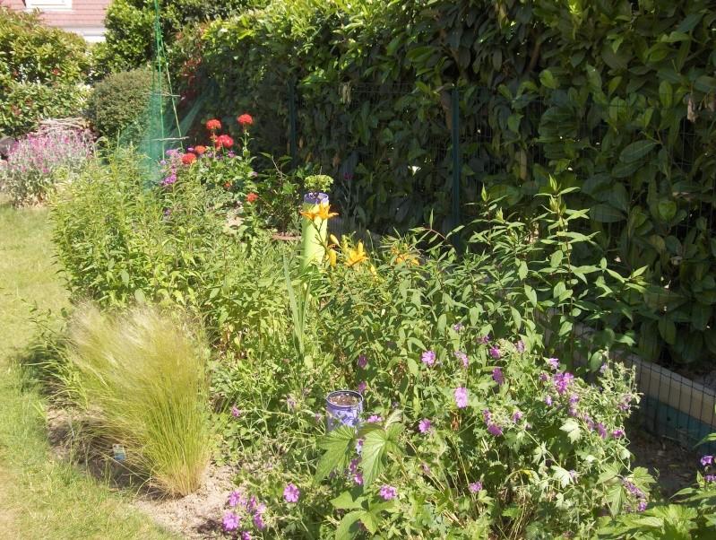 Les fleurs de mon jardin Hpim3119