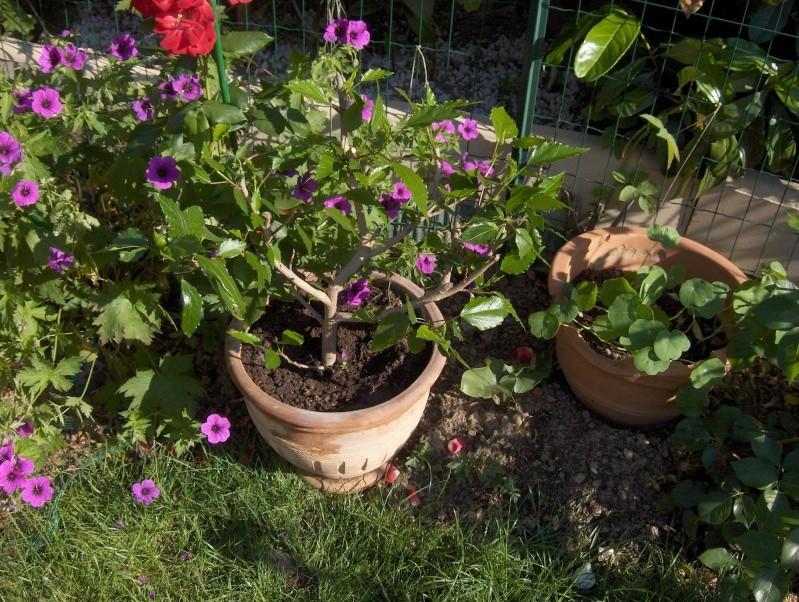 Les fleurs de mon jardin Hpim3120