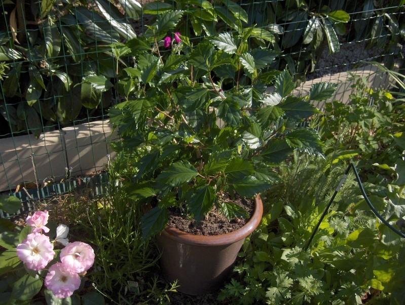 Les fleurs de mon jardin Hpim3121