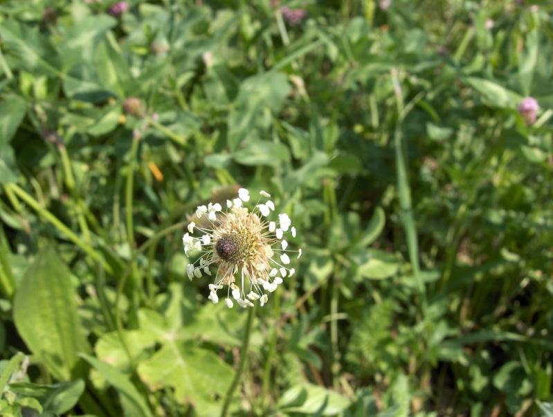 Ballade à travers champs Planta11