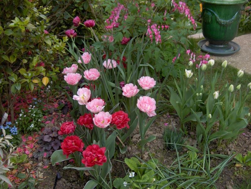 Floraisons du mois d'avril - Page 2 Tulipe16