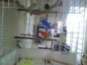 Jouets appréciés pour perruches - Page 2 Image217