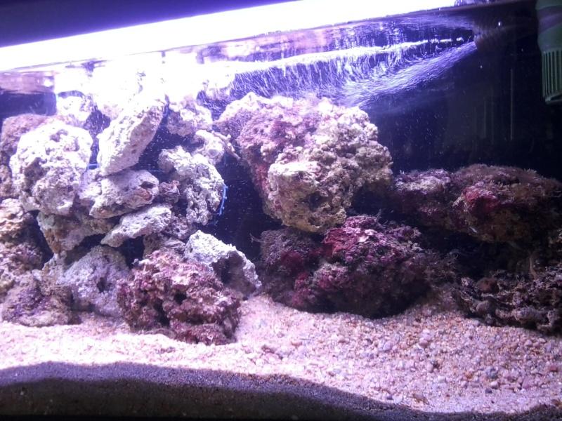 Aquarium méditerranéen Photo015