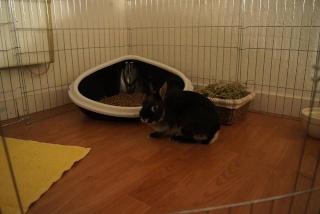 Boulga, née en novembre 2010 - Page 2 Dsc06617