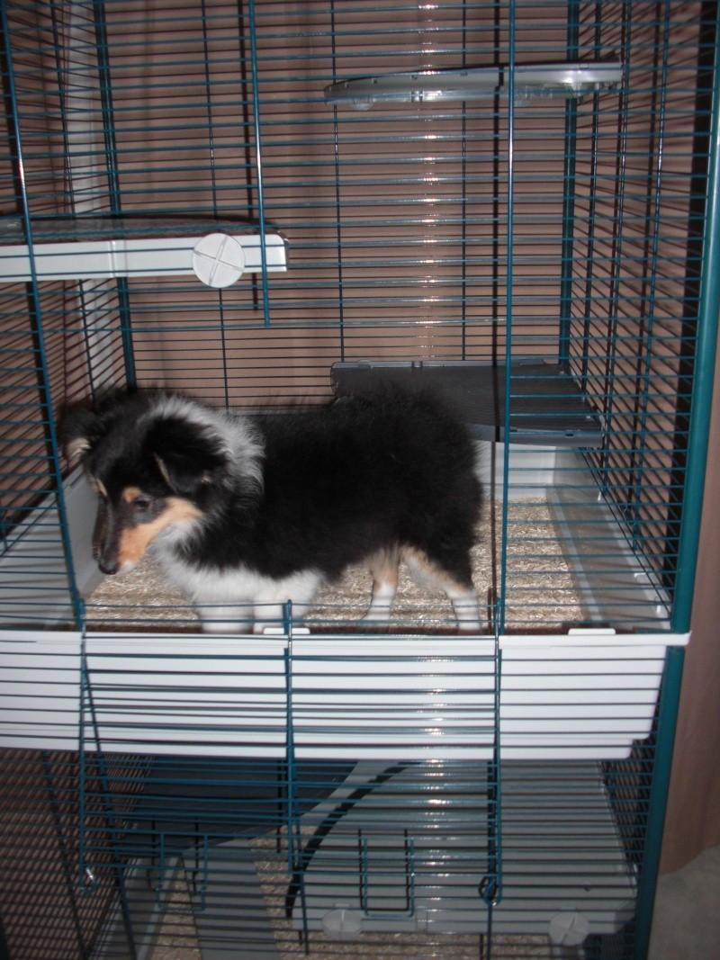 Photos de vos cages - Page 5 Cimg4212