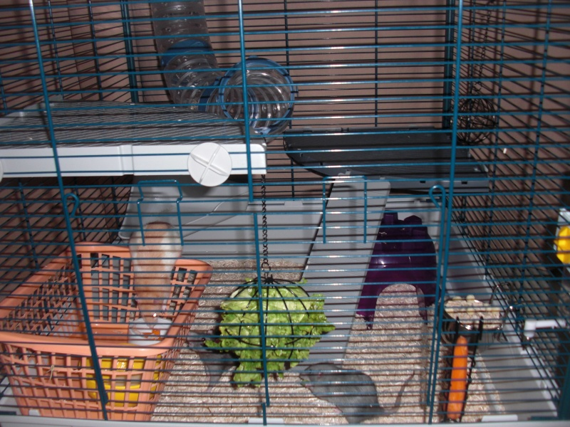 Photos de vos cages - Page 5 Cimg4314