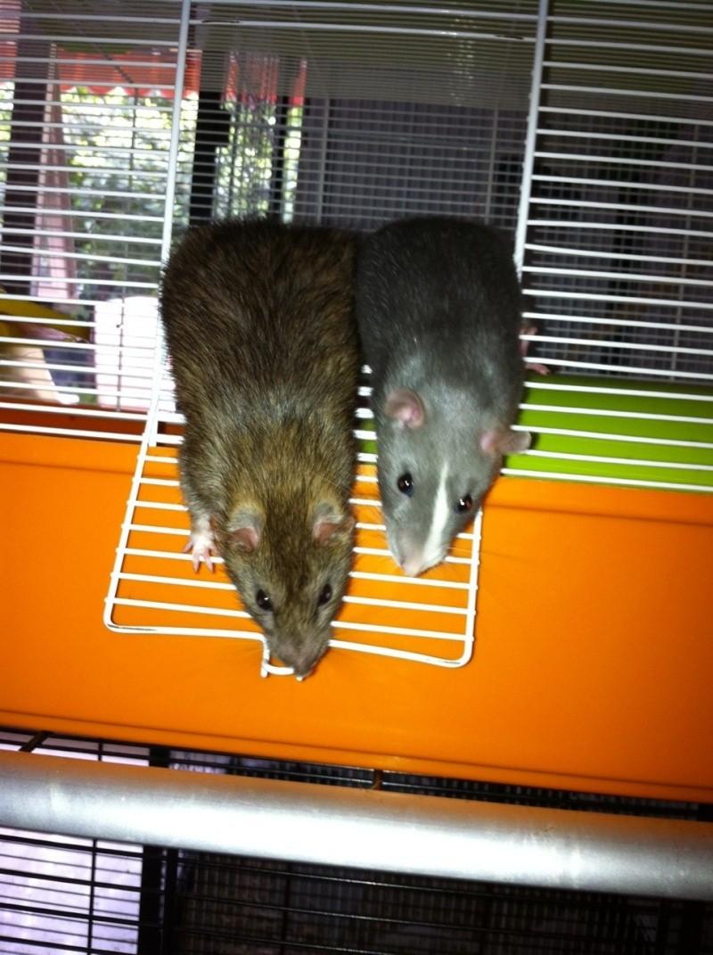 [ADPTION] Ratatouille x Globule sont parents ! Photo11