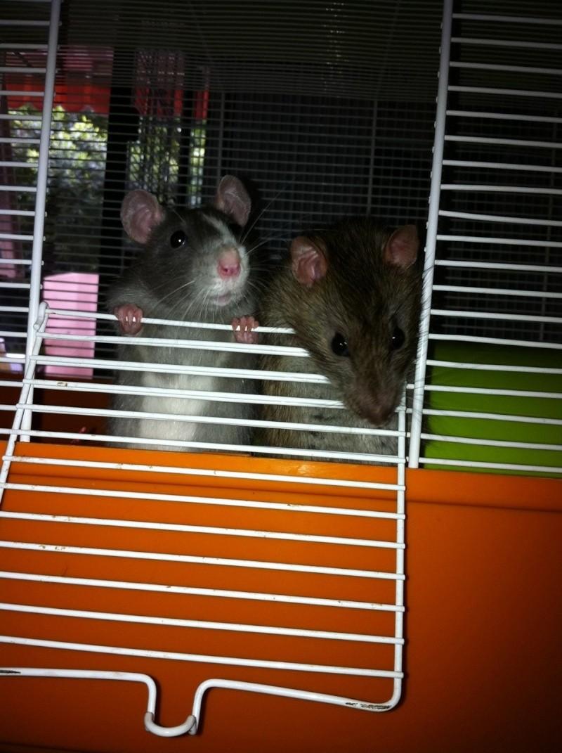 [ADPTION] Ratatouille x Globule sont parents ! Photo410