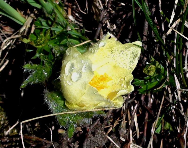 Flore du massif Dsc00114