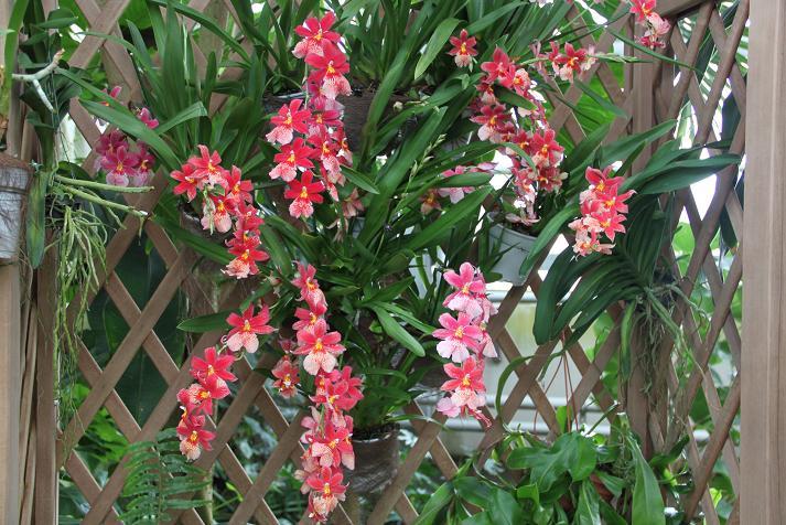 Serre tropicale Img_3721