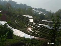 La Chine sac au dos (12) : Yunnan (云南): de Kunming (昆明) au Xishuangbanna (西双版纳) 1_rizi10