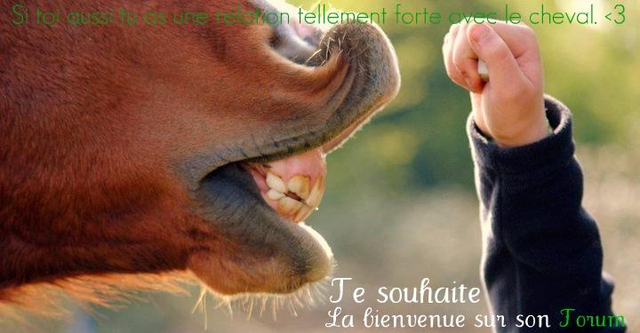 Cavalier(e)s & chevaux.