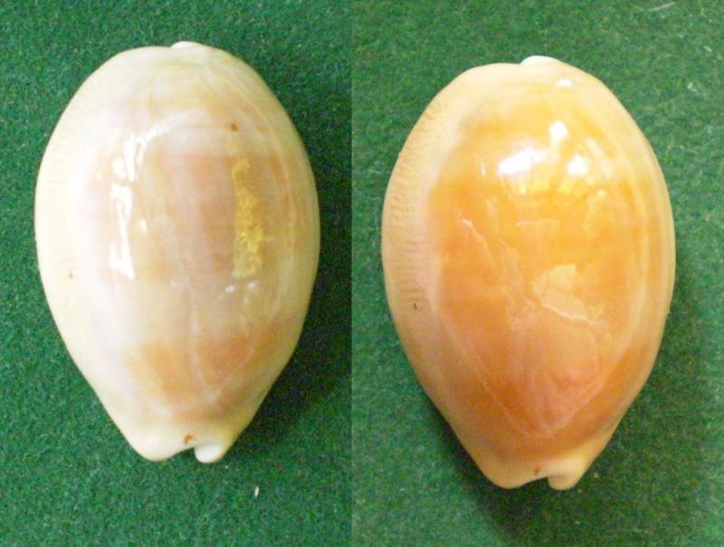 coup de jeune pour certaines porcelaines : traitement bio Panor201