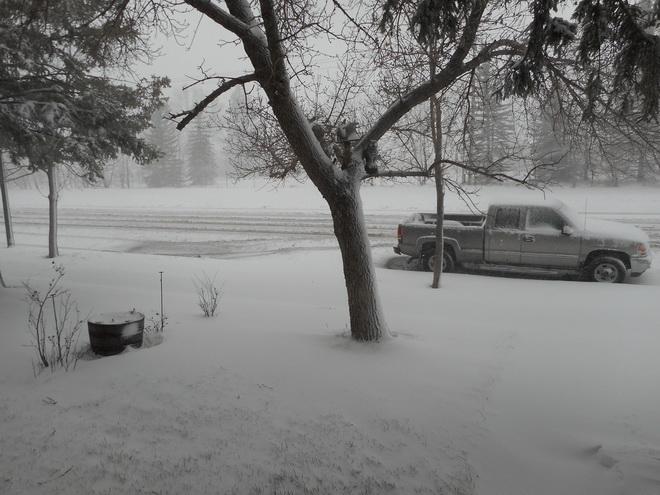 Spring storm in Alberta Dscn0311