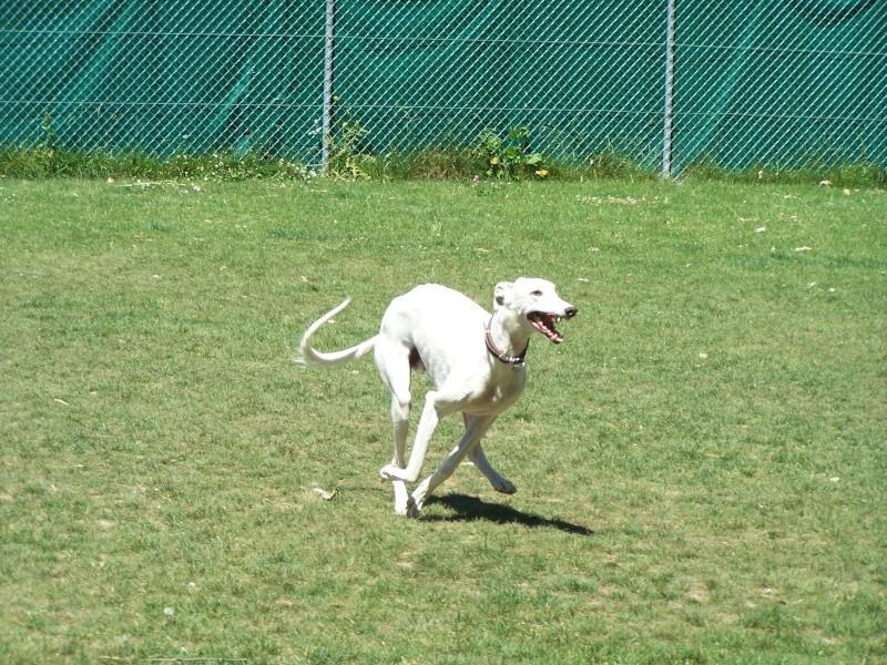 Rencontre entre adoptants au parc canin clôturé de Vidy (le 22 mai 2011) Avril-10