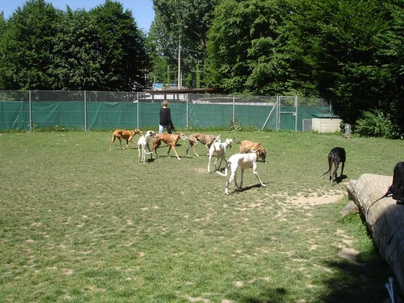 Rencontre entre adoptants au parc canin clôturé de Vidy (le 22 mai 2011) Photos11