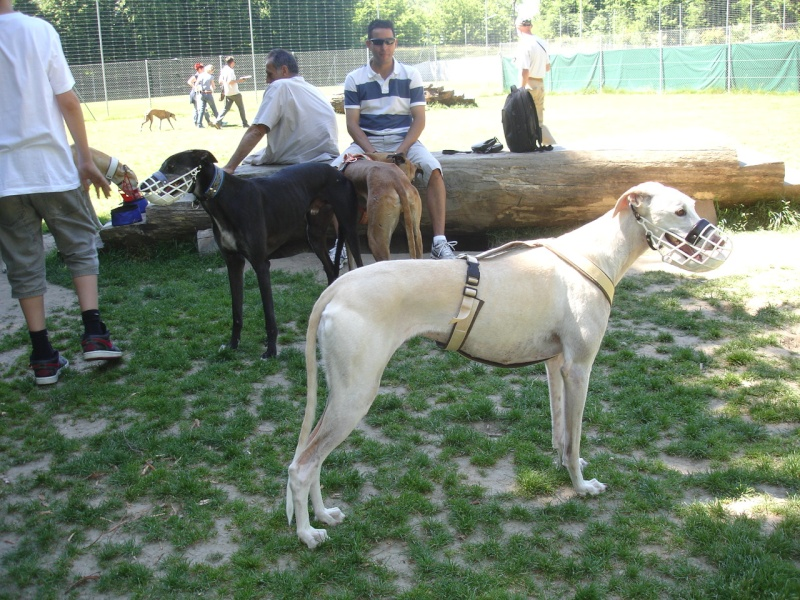 Rencontre entre adoptants au parc canin clôturé de Vidy (le 22 mai 2011) Photos12