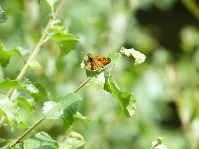 Balade en forêt Floranges P1040512