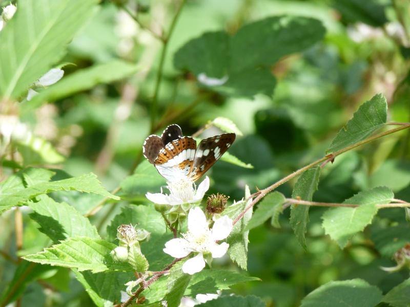 Balade en forêt Floranges P1040611