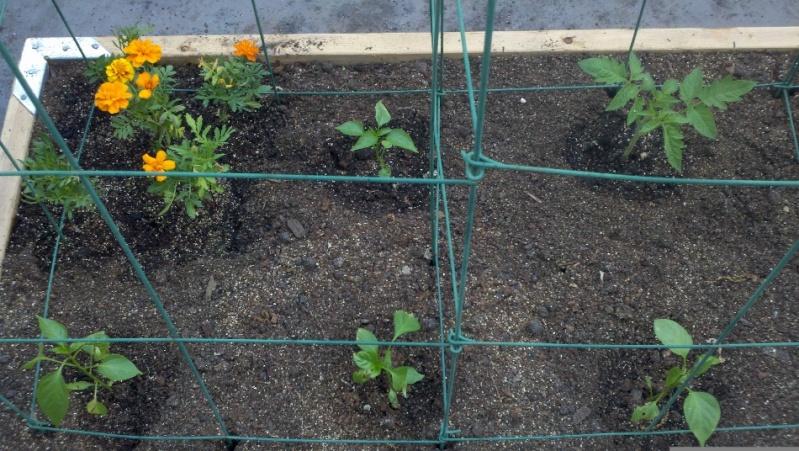 My SFG in pics! Garden36