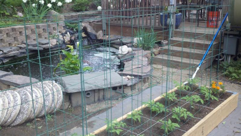 My SFG in pics! Garden37