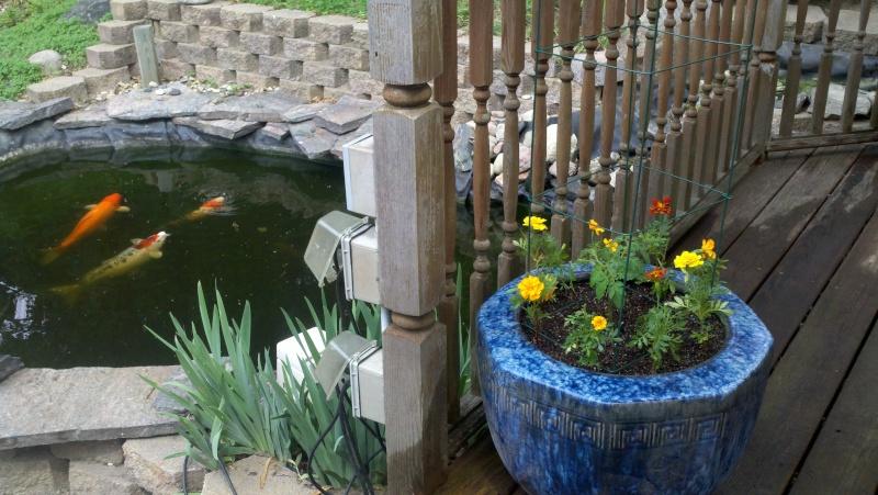 My SFG in pics! Garden43